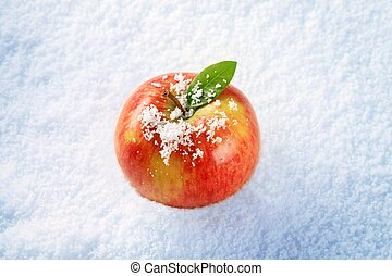 Apple in snow