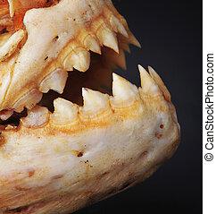 Pirañas, dientes