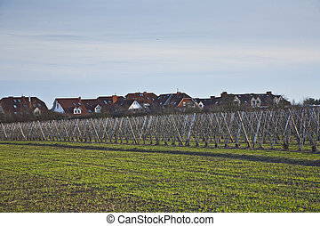 meadow in early spring fruit acre and housing area at...