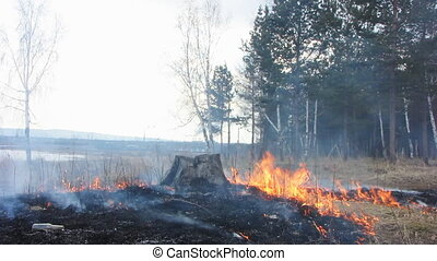 Forest fire 34 - The Fire in wood