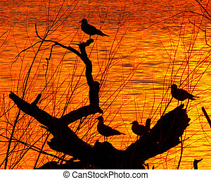 Sunset Sillouette - Sunset on the Grand River
