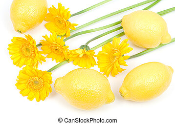 Lemon and african daisy on a white background