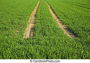 acre with green flowers in rows in beautiful light and skid...
