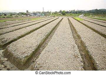 Cultivated land
