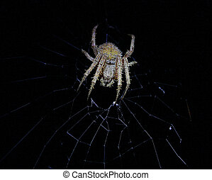 A scary mean and nasty looking Spider (arachnid) in his web...