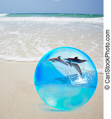 Dolphine jumping in crystal over sand and  sea