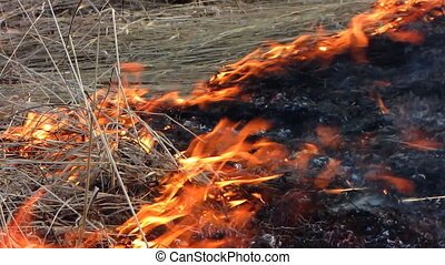 Forest fire 47 - Fire in the dry grass field.