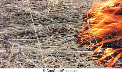 Forest fire 48 - Fire in the dry grass field