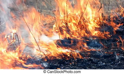 Forest fire 50 - Fire in the dry grass field.