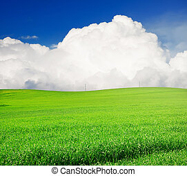 field of grass and perfect blue sky