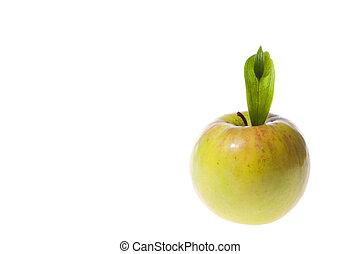 葉, アップル, 隔離された, 緑, 背景, 成果, 白