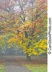 Colorful beechtree and mist in fall