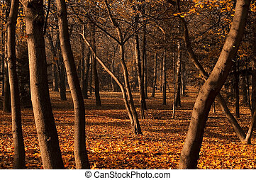 Forest in Autumn