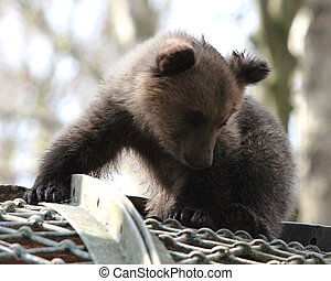 Bear - little bear in a zoo