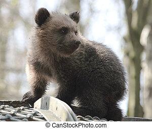 Bear - little bear in a zoo