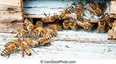 primer plano, trabajando, abeja