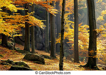 rock in beech forest