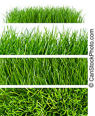 grass backgrounds - backgrounds of spring grass isolated