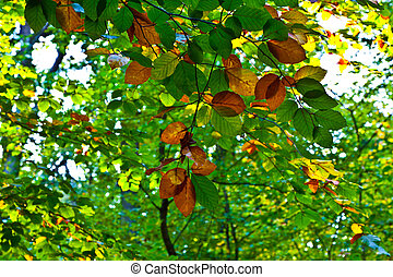 composition of oak leaves in harmony