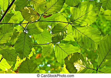 oak leaves in harmony - composition of oak leaves in harmony...