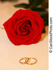 Roses and wedding rings isolated on the white