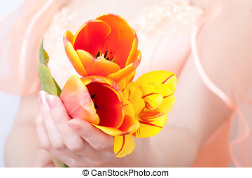 Tulips in hands of the bride