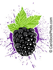 Vector berry - Vector blackberry with splash on background