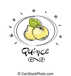 quince - hand drawn quince in vignette