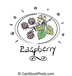 raspberry - hand drawn raspberry in vignette