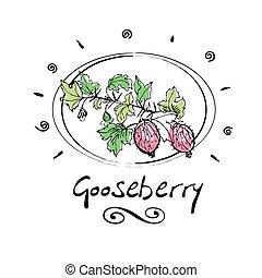 gooseberry - hand drawn gooseberry in vignette