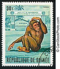 monkey - GUINEA - CIRCA 1969: stamp printed by Guinea, shows...