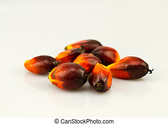 oil palm seeds bluish white surface - a bunch of oil palm...