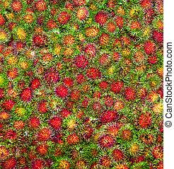 sweet fruits Rambutan similar to Lychee at the marker