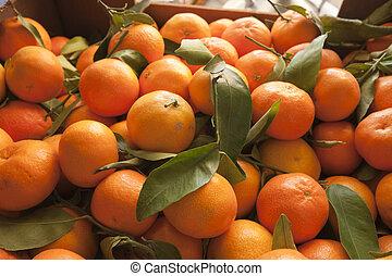 Mandarins - Freshly picked tangerines bulk of the tree in...