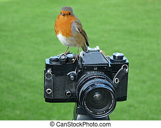 ROBIN REDBREAST PERCHED ON CAMERA - robin redbreast perched...