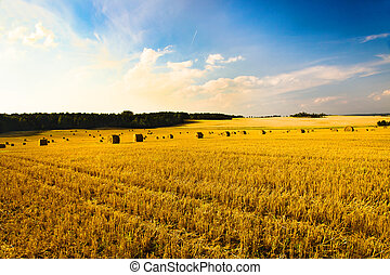 Agriculture - Agricultural field on which wheat is cleaned