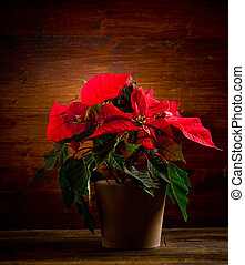 Poinsettia - photo of beautiful poinsettia plan on wooden...