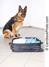 Airport canine - Police dog with suspicious luggage