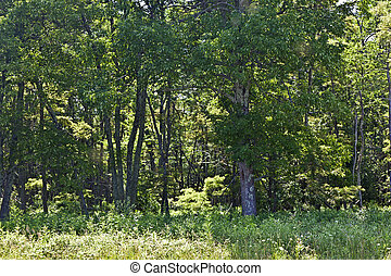 Beautiful forest in the popular Blue Ridge Mountains in...