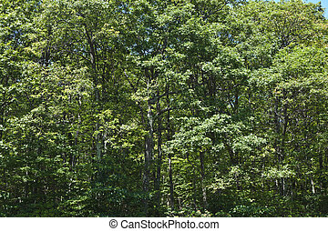 Beautiful forest in the popular Blue Ridge Mountains -...
