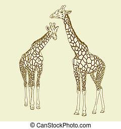Two giraffes. Vector illustration.