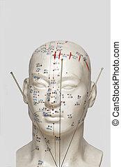 acupuntura, cabeza, agujas, modelo