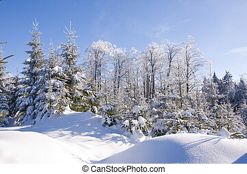 fresh snow in the mountains - mountains covered with fresh...
