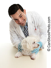 Veterinarian taking care of a pet dog - A male vet taking...