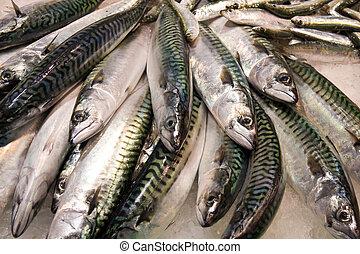 frais, fish, MARCHÉ