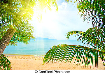 beach with palm tree over the sand - Beautiful beach with...