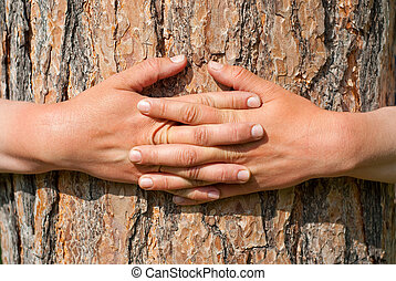 arms wrapped around a tree - Abstract Nature. Arms wrapped...
