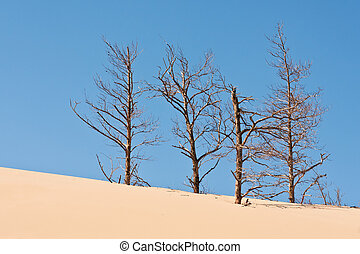 desertification - sand dunes eating up forest