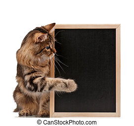 Cat with blackboard_1740jpg - Pretty young cat with a...