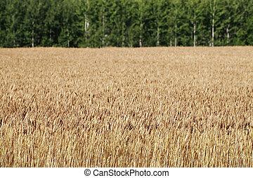 農業, 芬蘭語